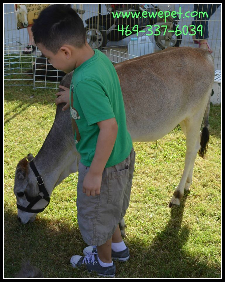 Mobile Petting ZooParty Ponies Petting Zoo BirthdaysFestivals